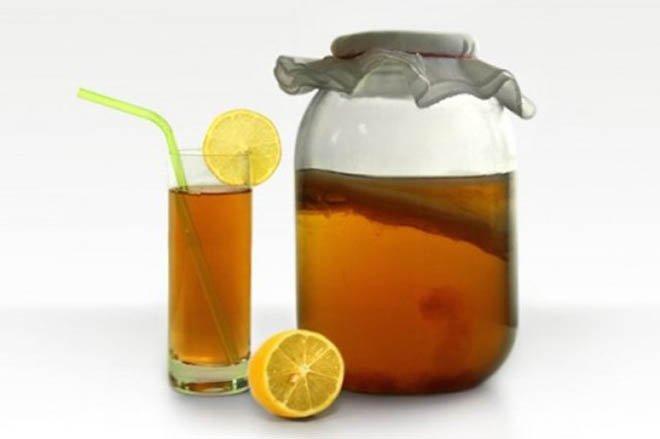 чайный гриб уход полезные свойства